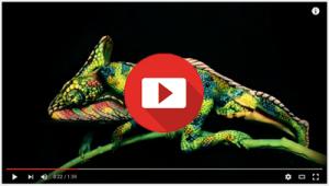 chameleonvideofinal